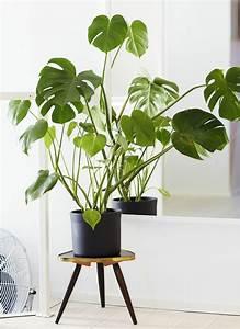 Große Zimmerpflanzen Pflegeleicht : zimmerpflanzen bilder gem tliche deko ideen mit topfpflanzen ~ Markanthonyermac.com Haus und Dekorationen