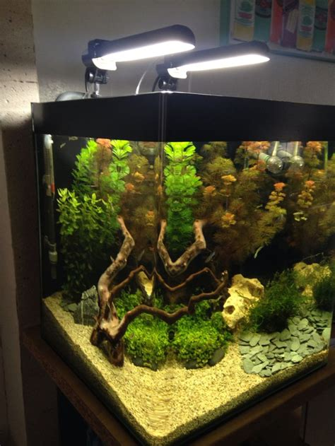 top 20 ideas about nano aquarium on different types of no worries and photo editor