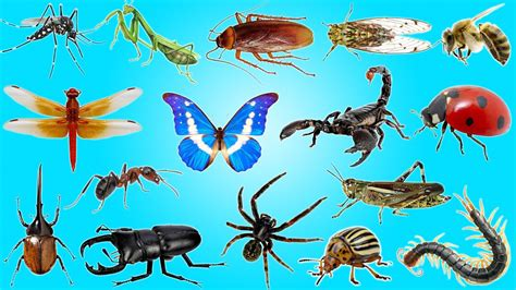Insects And Bugs For Kids Learning  Insects & Bugs In Real Life  Education Learning Video