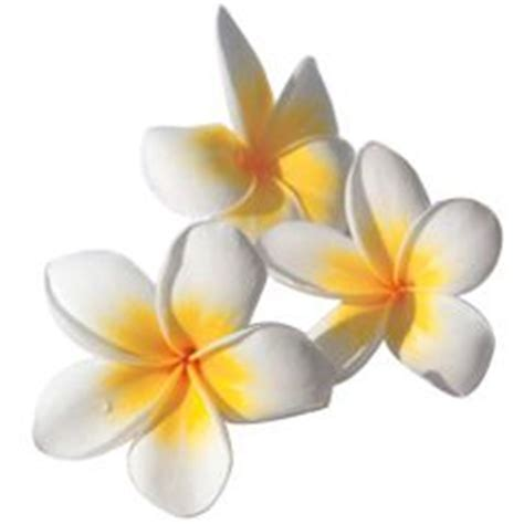39 best images about tiare on hindus tahiti and mona