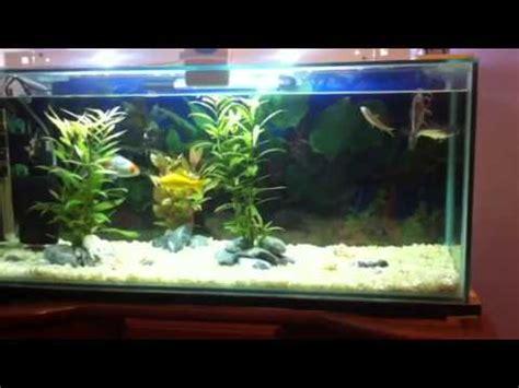 aquarium poisson eau douce