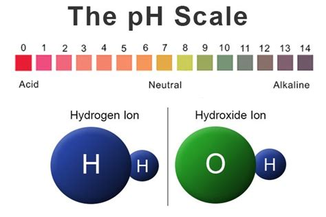 Back To Basics Acids, Bases & The Ph Scale  Precision Laboratories