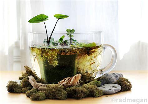 mini estanques en tazas de caf 233 elpatiodetucasaesparticular