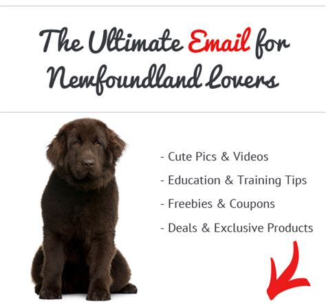 how bad do newfoundlands shed advice from real newfoundland owners