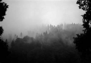 Schwarz Weiß Kontrast : schwarz wei wald 1 foto bild natur landschaften youth bilder auf fotocommunity ~ Markanthonyermac.com Haus und Dekorationen