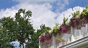 Die Schönsten Balkonpflanzen : pflegeleichte balkonpflanzen infos und tipps garten mix ~ Markanthonyermac.com Haus und Dekorationen