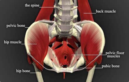 how to treat pelvic floor disfunction clickhowto