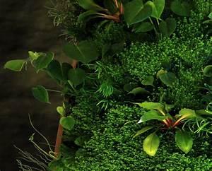 Pflanzen An Der Wand : pflanzen an der wand top erset ball anthrazit with pflanzen an der wand best stilvolle ~ Markanthonyermac.com Haus und Dekorationen
