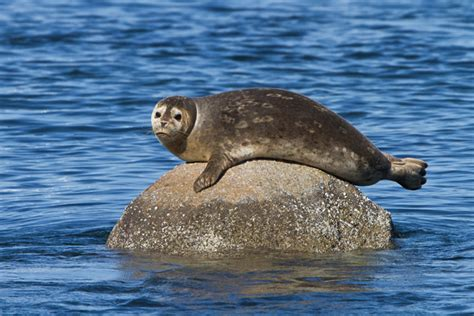 Party Boat Fishing Ct by Harbor Seal Cruises