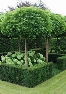 Baum Für Schattigen Vorgarten : schattenspendende b ume im garten pflanzen garten pinterest garten pflanzen baum und pflanzen ~ Markanthonyermac.com Haus und Dekorationen