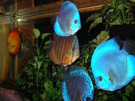 poisson d eau douce recherche poissons d eau
