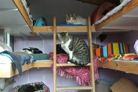 divers l ecole du chat libre organise une journee d adoption a villeparisis le 23 fevrier