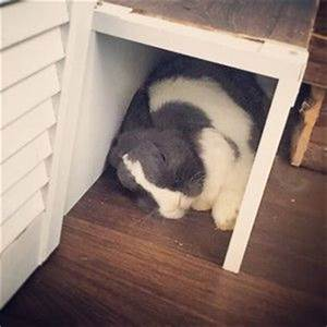 Gewächshaus Für Die Wohnung : selbstgebauter kaninchenauslauf f r die wohnung ~ Markanthonyermac.com Haus und Dekorationen