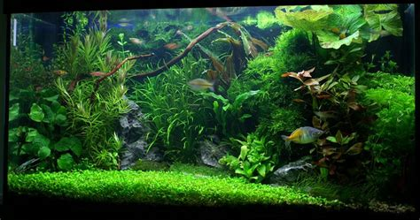 comment choisir les plantes d un aquarium d eau douce aquascaping aquarium