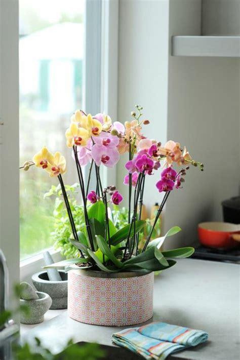 les fleurs d int 233 rieur les orchid 233 es en 40 images