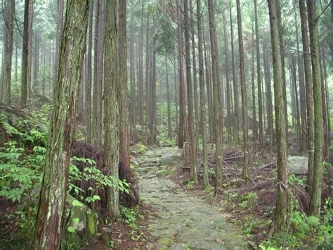ancient mountain forest path by omnimalevolent1 on