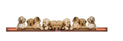 un joli petit chien dans la vitrine rencontre avec l 194 ne suivie d une confidence en plus