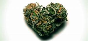 The Marijuana Diet – how cannabis can help you lose weight ...