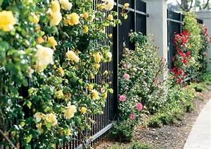 Kletterrosen Richtig Pflanzen : rosen pflanzen zeitpunkt pflanztipps f r rosen zeitpunkt standort und co galanet kletterrosen ~ Markanthonyermac.com Haus und Dekorationen