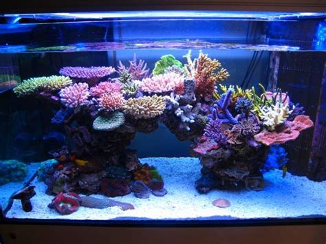 reef aquariums for your inspiration reefland