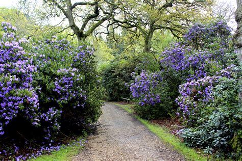 quels arbustes planter en mars