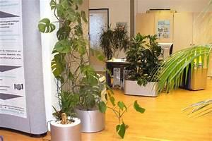 Feng Shui Pflanzen Reichtum : b ro feng shui entdecken ~ Markanthonyermac.com Haus und Dekorationen