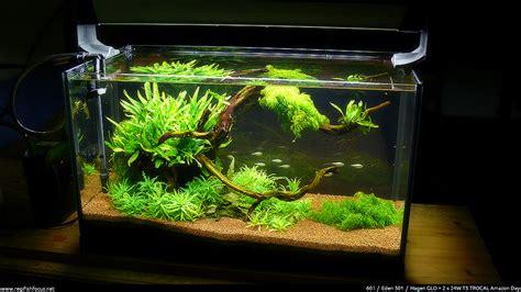 quot root quot 60l association aquariophilie org