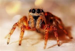 Spinnen Fernhalten Wohnung : spinne mit staubsauger aufsaugen das passiert wirklich ~ Whattoseeinmadrid.com Haus und Dekorationen