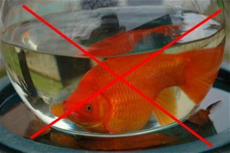 mod 232 le aquarium pour poisson