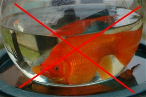 conseils pour poisson