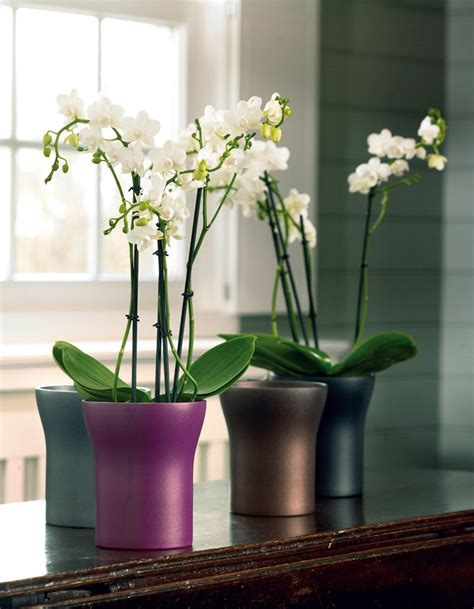 cache pot orchidee design