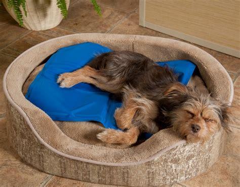 tapis rafraichissant pour chien pour le garder au frais par temps chaud
