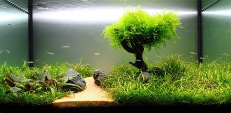 freshwater live plant aquarium setup aquarium design ideas