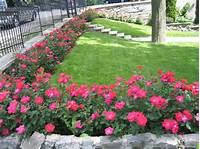 nice rose garden design Nice Rose Garden Design - Garden Design #10
