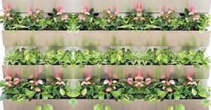 Pflanzen An Der Wand : gr ne wand f r alle pflanzen und jeden standort ~ Markanthonyermac.com Haus und Dekorationen