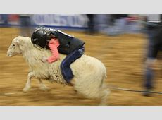 Lamb chopped Mutton Busting tiny tots show fierce