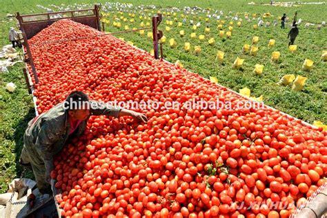 concentr 233 de tomate 28 30 brix tomate p 226 te chine usine chine fabricant l 233 gumes en conserve id