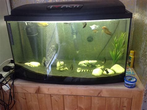 900 gallon fish tank for sale 1 gallon fish tank sale 2017 fish tank maintenance