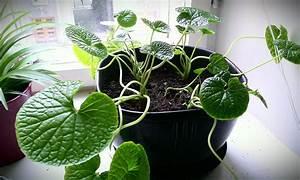 Feng Shui Pflanzen Reichtum : zimmerpflanzen umtopfen gr ne pflanzen richtig umgetopft ~ Markanthonyermac.com Haus und Dekorationen