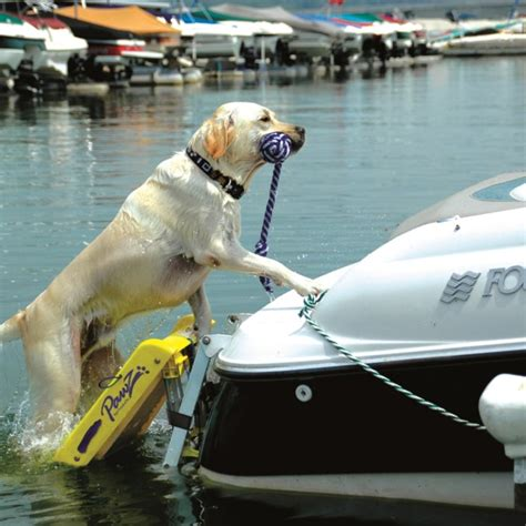 Boat Shop Dog by The Modern Bark Dog Training Tips Which Is The Best