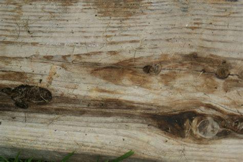 textures vieux bois le regard de kuma