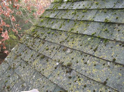 Lichen And Moss Roof Remediation Rubber Eco Roof Tiles Uk Pitched House Designs Australia Clay Roofing Tile Types Truss Repair Brisbane Jobs In New Jersey Moss On Felt Flat Metal Roofers Baton Rouge Rsg Supply Group