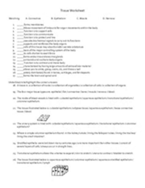 Tissues, Glands, And Membranes Study Guide  4 Tissues Glands And Membranes Body Movement