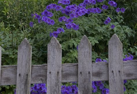 Cottage Garden Fences  The Enduring Gardener