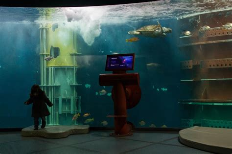 anneaux des mers grand aquarium de malo