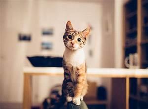 Grundstück Kaufen Was Ist Zu Beachten : eine katze kaufen was ist zu beachten zooroyal magazin ~ Markanthonyermac.com Haus und Dekorationen