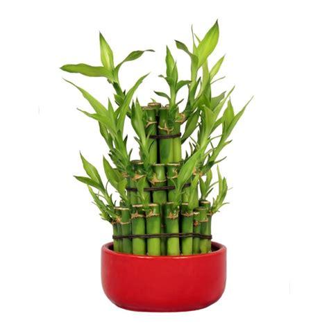 le lucky bambou conseille n 176 1
