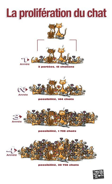 pourquoi faire st 233 riliser chat chats and co