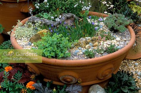 gap gardens large terracotta pot from whichford pottery with alpine planting image no