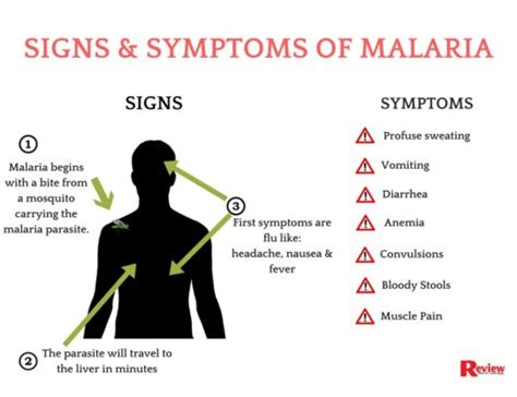 [infographic] Signs & Symptoms Of Malaria  Review. Questionnaire Signs. Information Signs. Anesthesia Signs. Winchester Signs. 22nd August Signs. Rectangle Signs Of Stroke. Professional Signs. Emergency Medical Signs